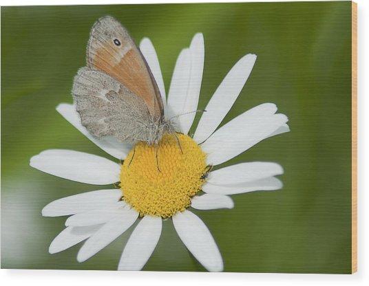 Daisy's Visitor Wood Print