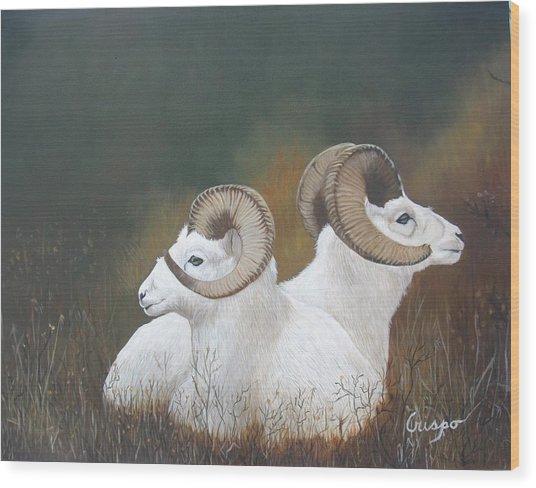Dall Rams Wood Print