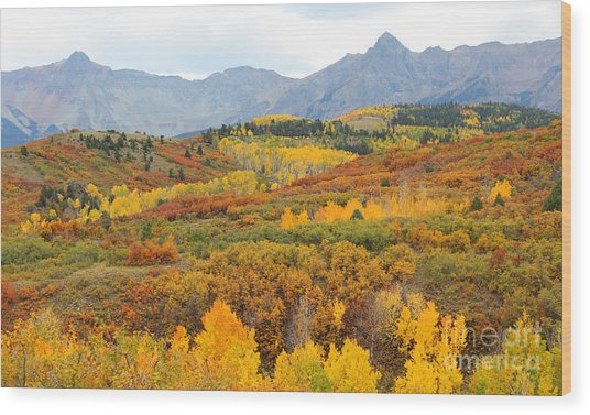 Dallas Divide In The Fall Wood Print