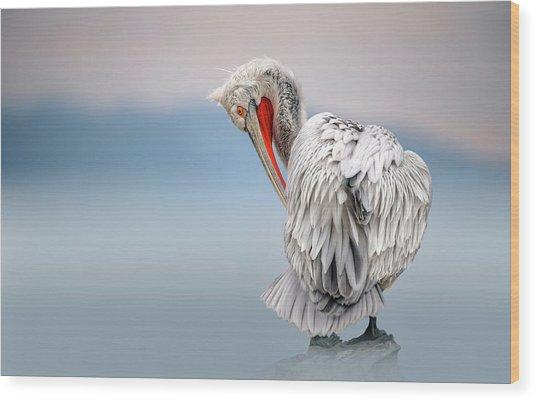 Dalmatian Pelican At Dawn Wood Print