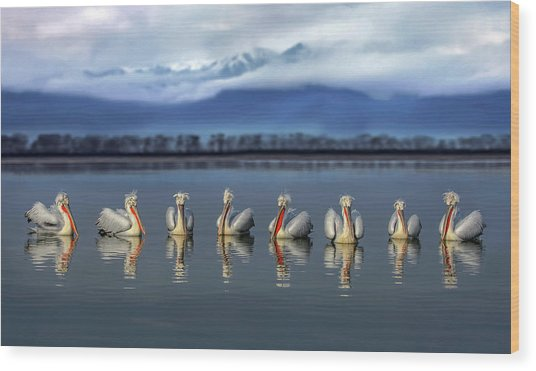 Dalmatian Pelicans Meeting Wood Print by Xavier Ortega