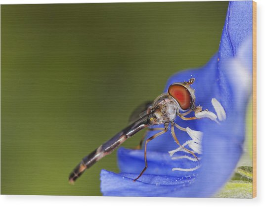 Damselfly 2 Wood Print