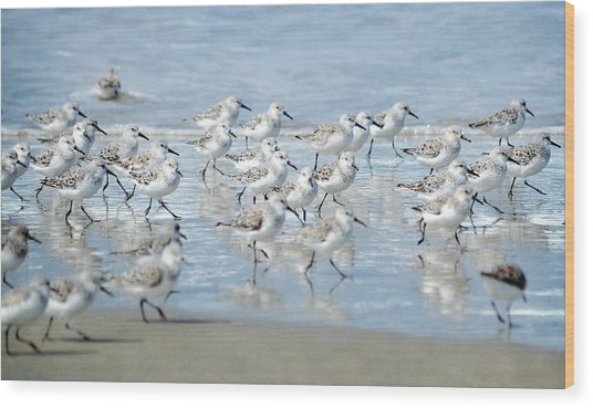 Dance Of The Sandpipers Wood Print