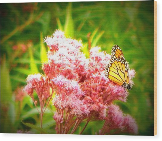 Dancing Butterfly Wood Print