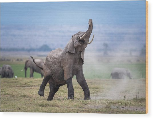 Dancing Elephant Wood Print by Jeffrey C. Sink