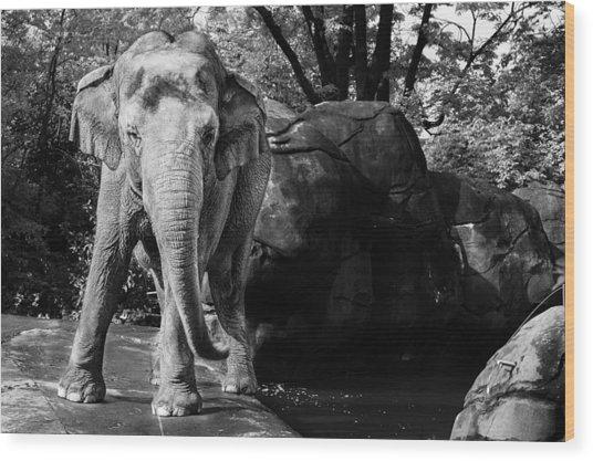 Dancing Elephant Wood Print