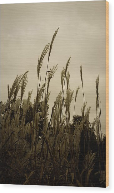 Dancing Grass Wood Print