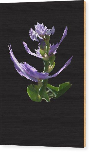 Dancing Iris 1 Wood Print