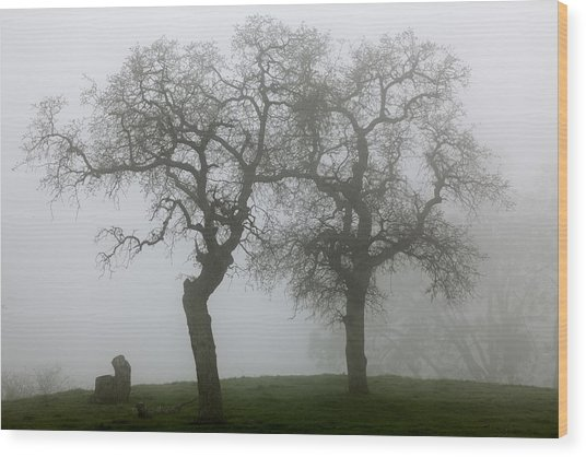Dancing Oaks In Fog - Central California Wood Print