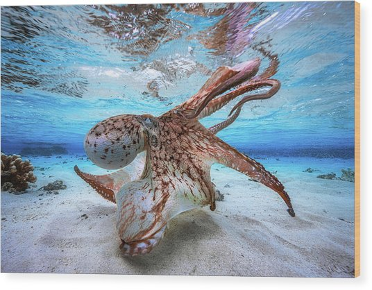 Dancing Octopus Wood Print