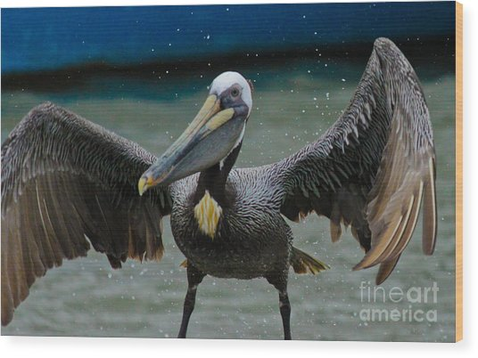 Dancing With A Pelican Wood Print