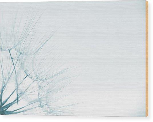 Dandelion Detail Against White Background Wood Print