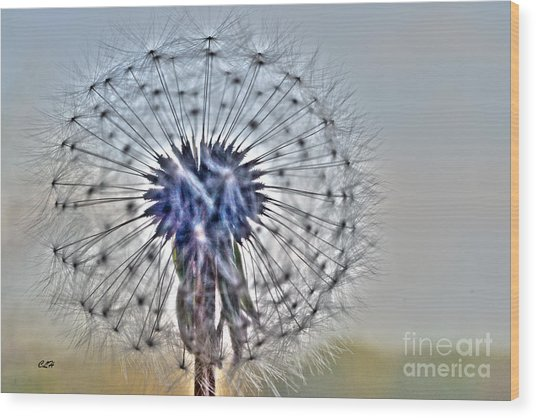 Dandelion Glow Wood Print
