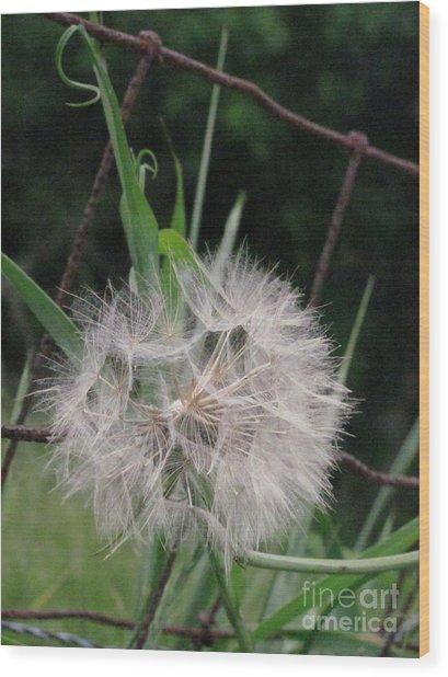 Dandelion In The Field Wood Print by Linda Walker