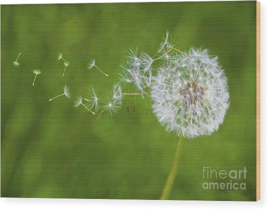 Dandelion In The Wind Wood Print
