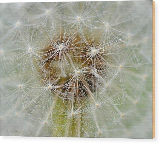 Dandelion Matrix Wood Print