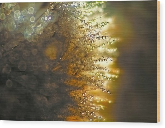 Dandelion Shine Wood Print