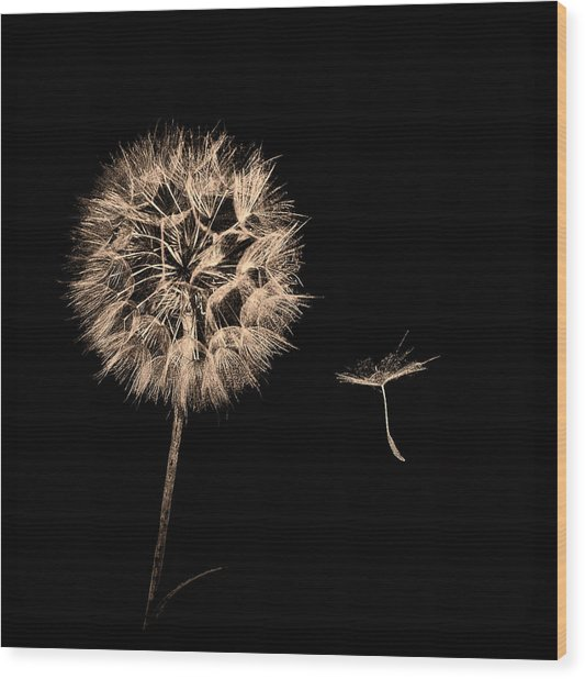 Dandelion With Seed Wood Print
