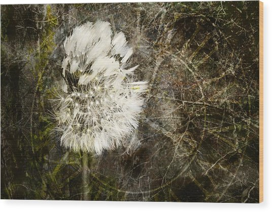 Wood Print featuring the photograph Dandelions Don't Care About The Time by Belinda Greb