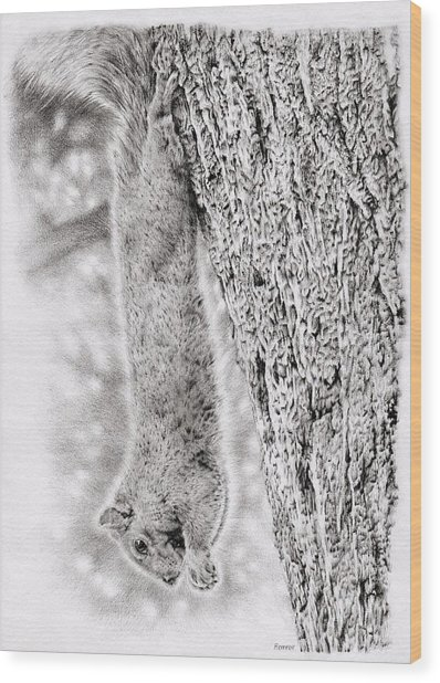Dangling Squirrel Wood Print