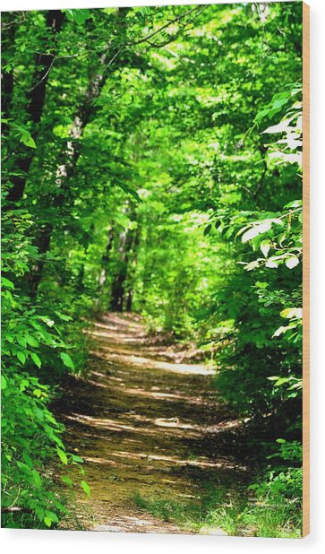 Dappled Sunlit Path In The Forest Wood Print