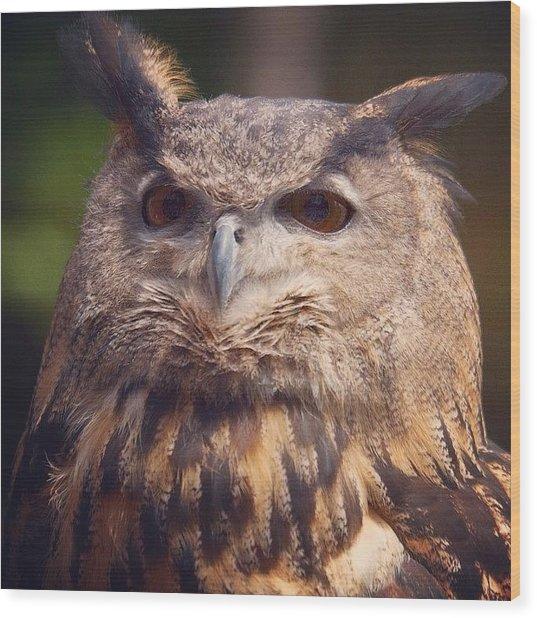 Dare I Say Owls Are A Hoot? Wood Print