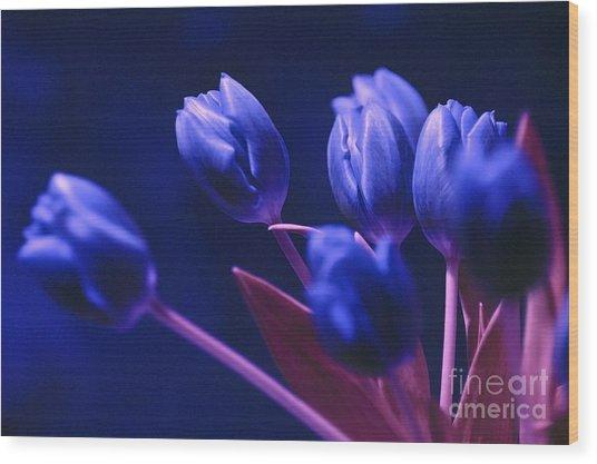 Dark Blue Tulips Wood Print
