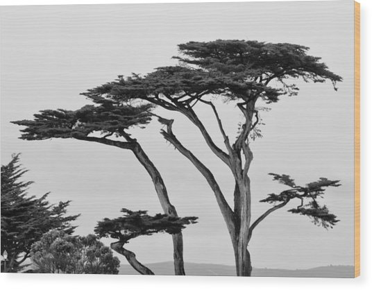 Dark Cypress Wood Print