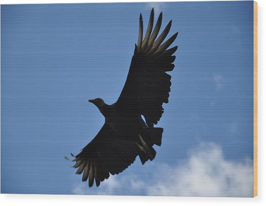 Dark Eagle  Wood Print