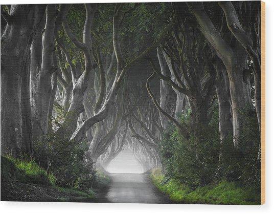 Dark Hedges Wood Print