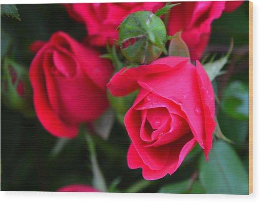 Dark Pink Roses #1 Wood Print