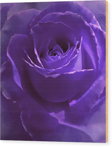 Dark Secrets Purple Rose Wood Print