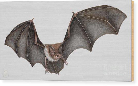Daubentons Bat Myotis Daubentonii - Murin De Daubenton-murcielago Ribereno-vespertilio Di Daubenton Wood Print by Urft Valley Art