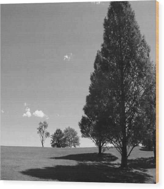 Davenport Park Wood Print