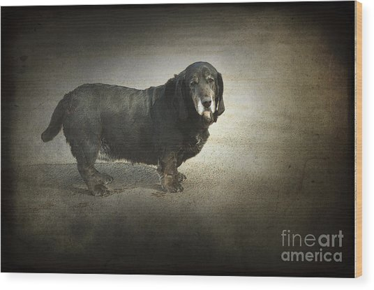 Dawg Wood Print by The Stone Age