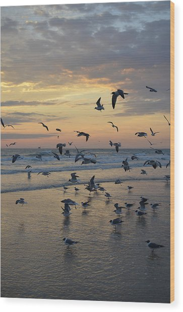 Dawn Gulls Wood Print