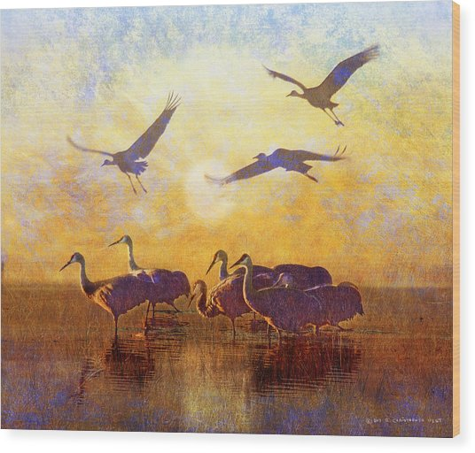 Dawn On The Bosque Sandhill Cranes Wood Print by R christopher Vest