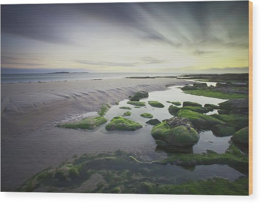 Dawn Over Seahouses Beach Wood Print