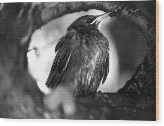 Dax's Bird Wood Print