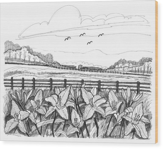 Day Lilies At Northwind Farms Wood Print
