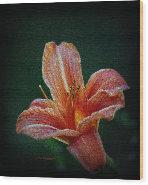 Day Lily Rapture Wood Print