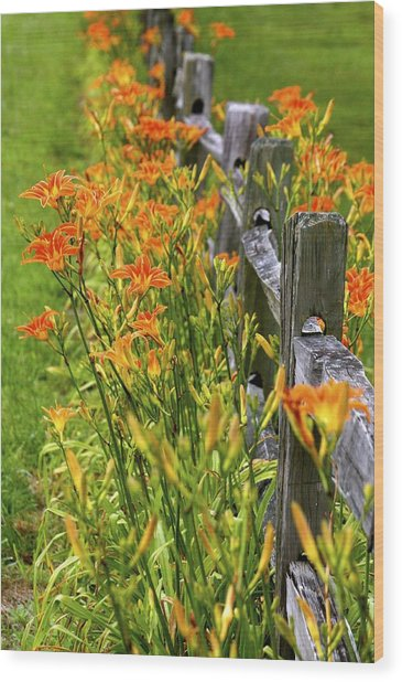 Daylilies Along Fence Wood Print