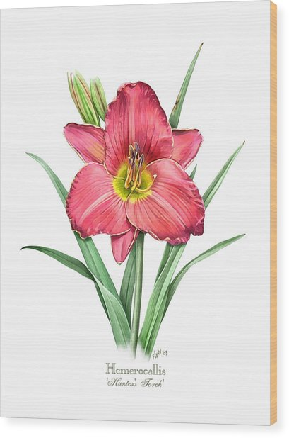 Daylily Hunters Torch Wood Print