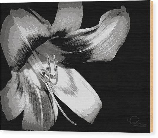 Daylily In Gray Wood Print