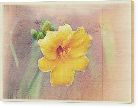 Daylily  Showers Wood Print