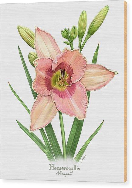 Daylily Svengali  Wood Print