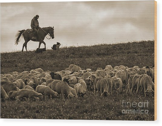 Days End Sheep Herding Wood Print