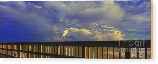 Daytona Beach Rail Bird Sun Glow Pier  Wood Print