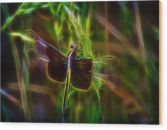 Dazzling Dragonfly Wood Print by Barry Jones