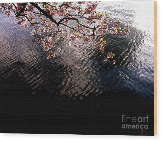 Dc Cherry And Black Wood Print by Jacqueline M Lewis